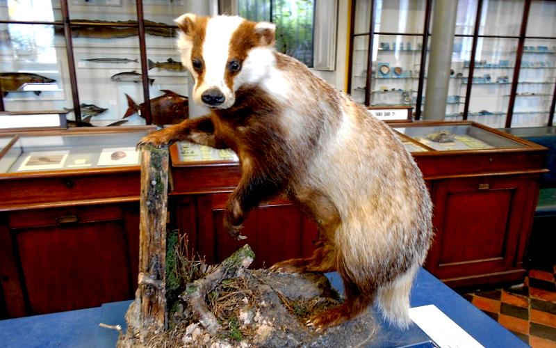 Museu de Estória Natural Dublin