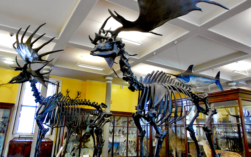 museu-dublin-08
