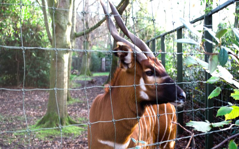 Animais no Dubiln Zoo na Irlanda