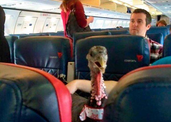Viajando com o perú, passageiros inconvenientes